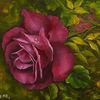 Rose, Tropfen, Magenta, Blumen