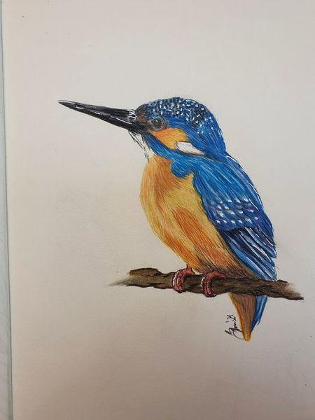 Blau, Orange, Eisvogel, Tiere, Vogel, Zeichnungen