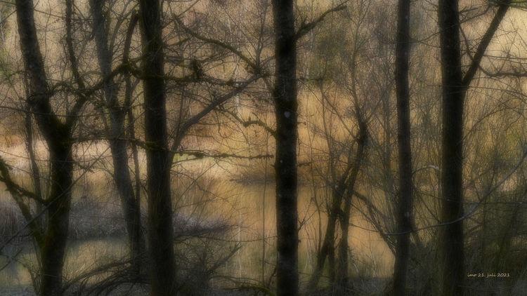 Irreal, Melancholie, Baum, Schatten, Licht, Fotografie