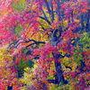 Licht, Baum, Farben, Fotografie