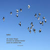 Taube, Vogel, Haiku, Fenster