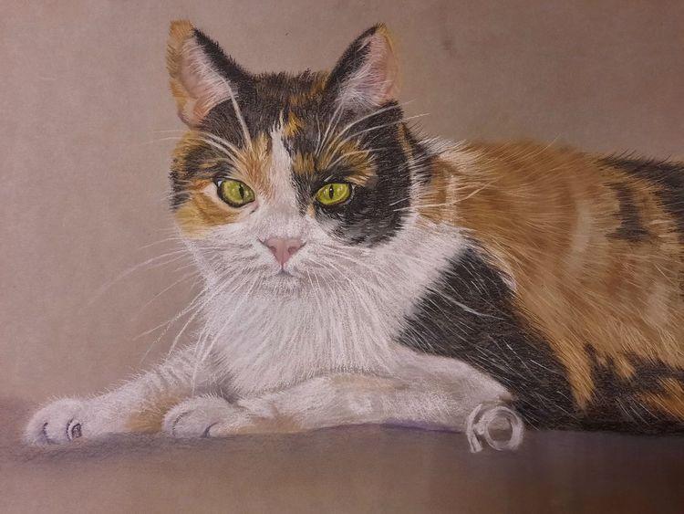 Tiere, Glückskatze, Pastellmalerei, Haustier, Katze, Zeichnungen